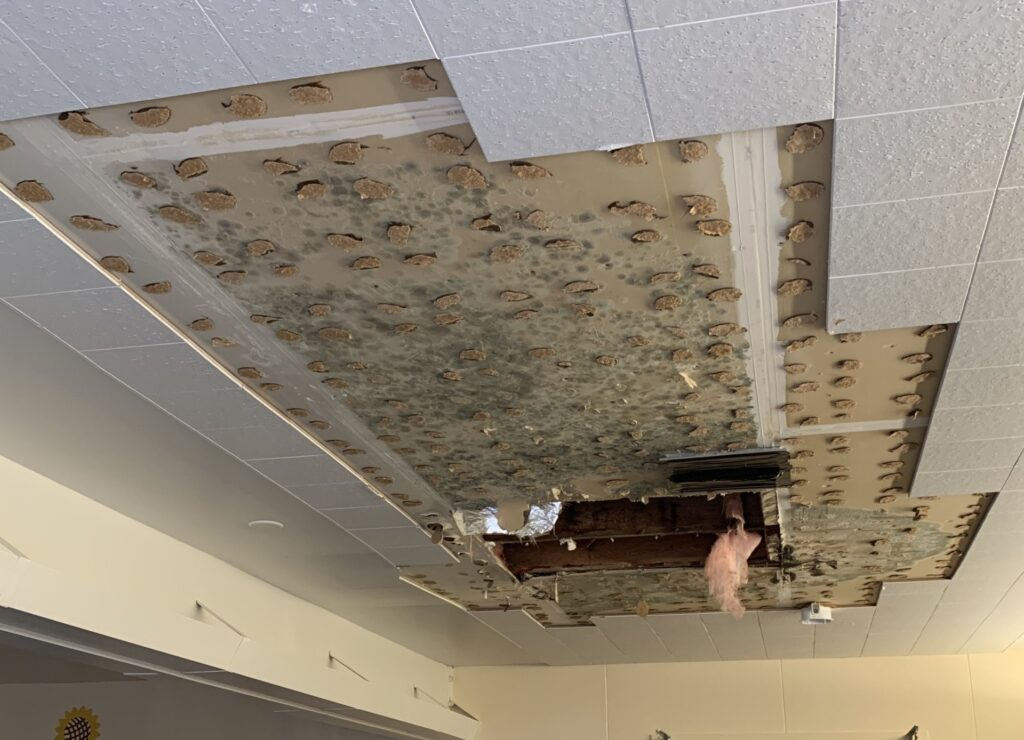 Mold+on+Ceiling+Roof+Leak